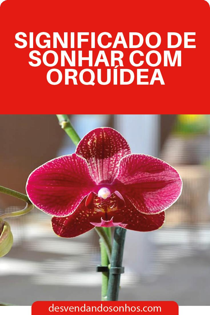 Descubra Ja Os Significados De Sonhar Com Orquidea Orquidea
