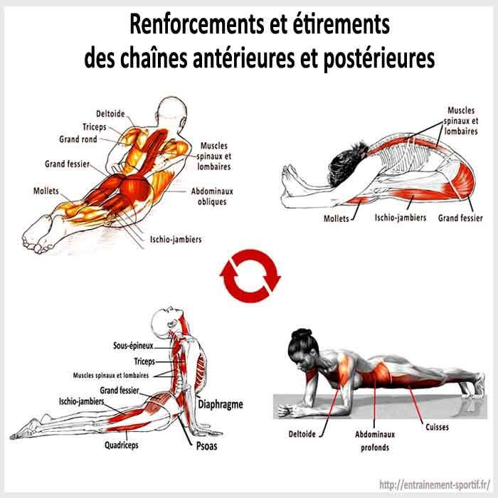 Renforcements et tirements des muscles du dos et du for Abdos fessiers a la maison