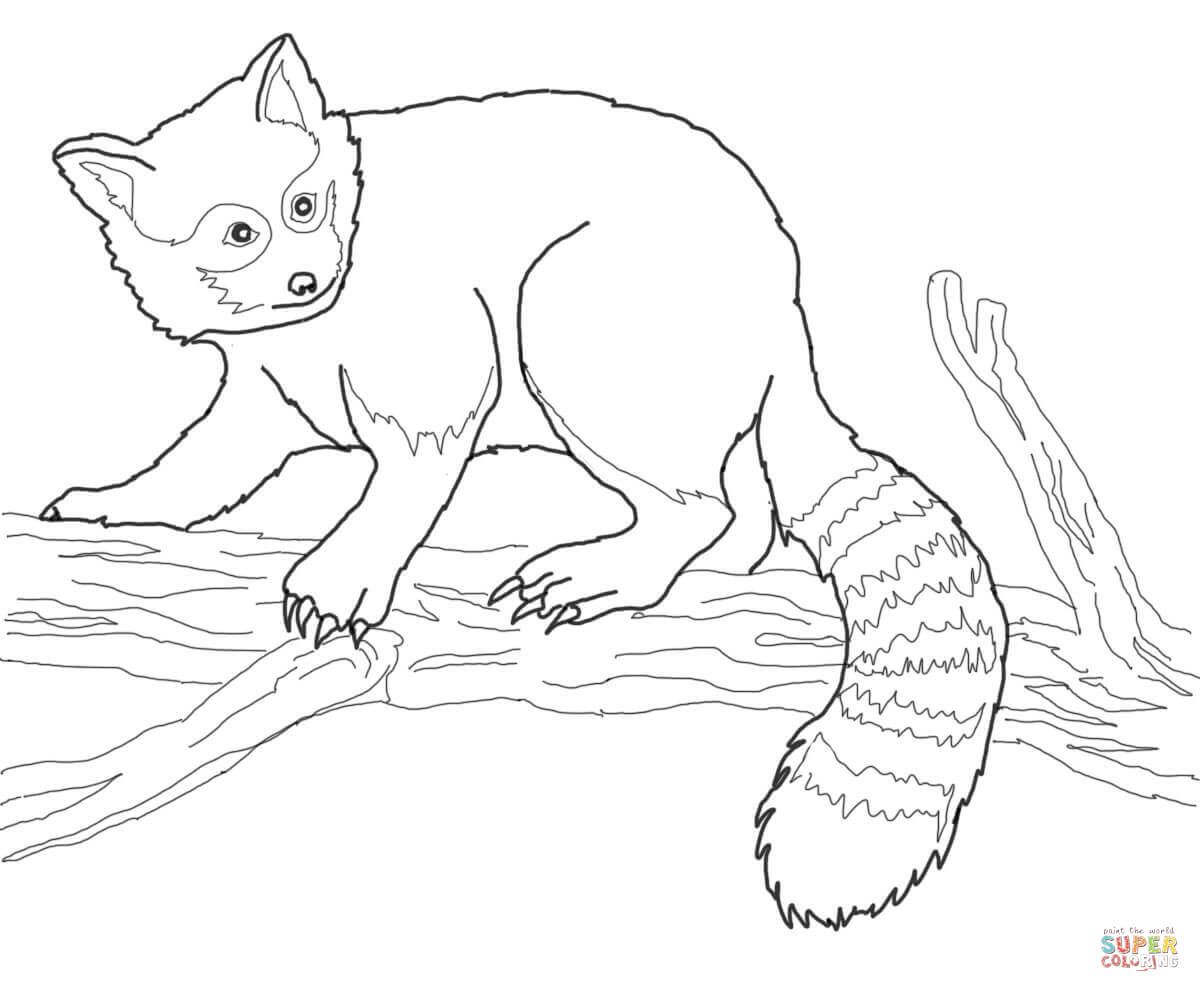 Printable Red Panda Coloring Page Instant Download Adult Coloring
