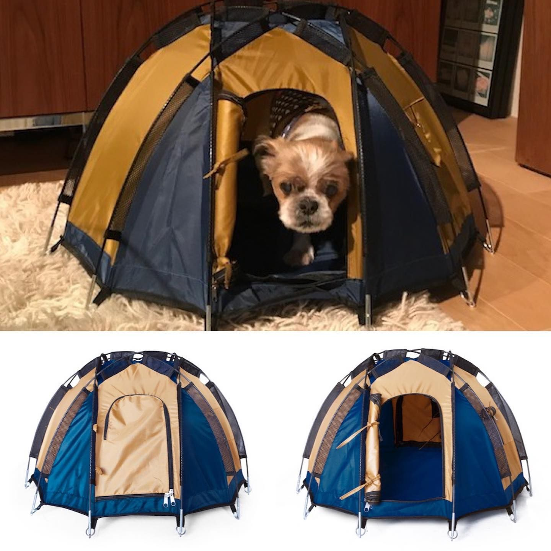 ペット用ドーム型テント selected by ハイロック 6 400円 税抜 出会った瞬間に一目惚れして即購入した ペット用ドーム型テント ペット用とはいえ 6本のポールで構成されるかなりしっかりと本格的なドーム型テントに仕上がっ outdoor gear tent