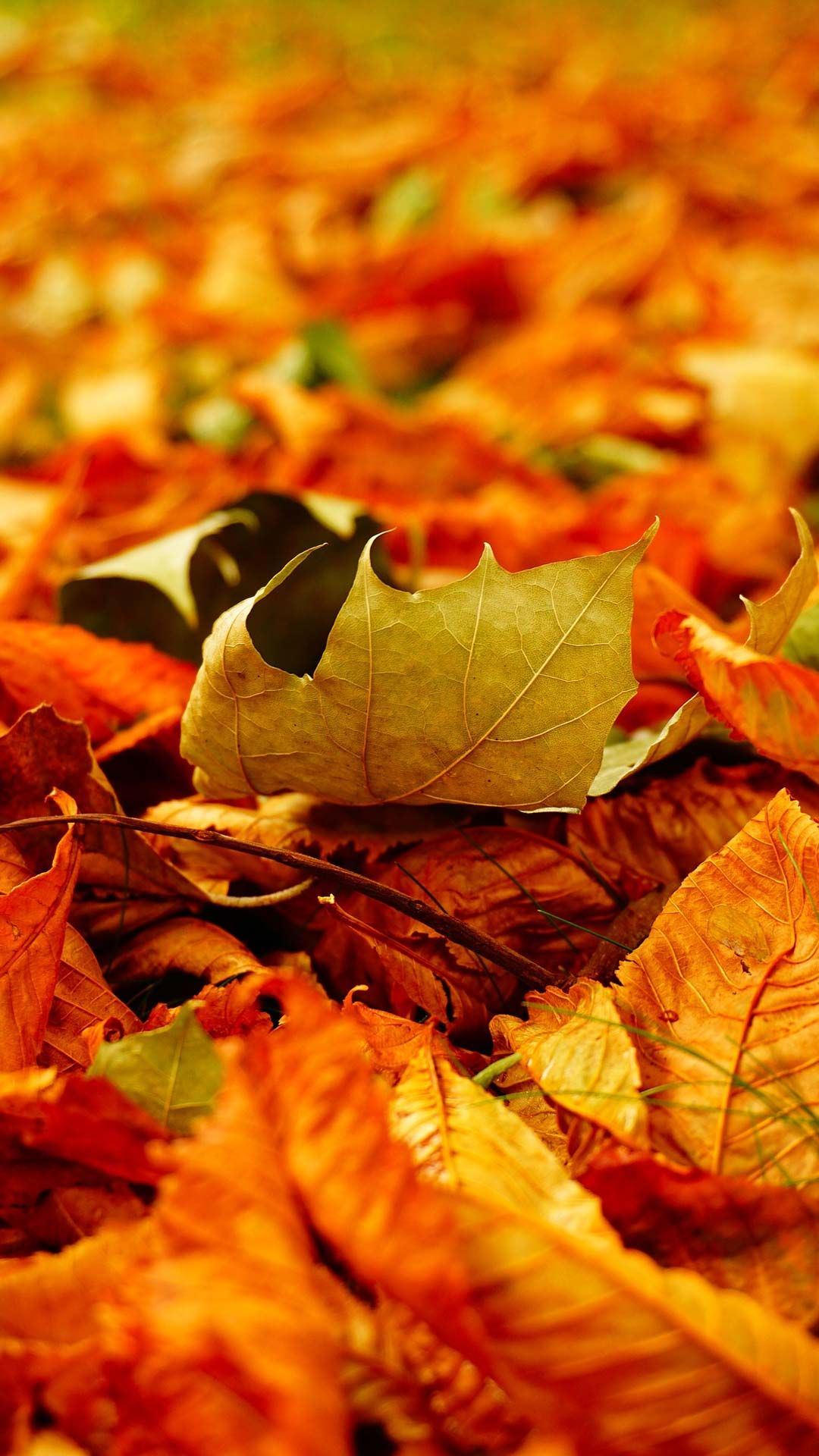 20 Fall Foliage Wallpaper Phone Backgrounds For Free Download Cute Fall Wallpaper Fall Background Wallpaper Android Wallpaper Fall