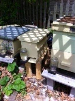How to Start Beekeeping in Your Backyard | Bee keeping ...