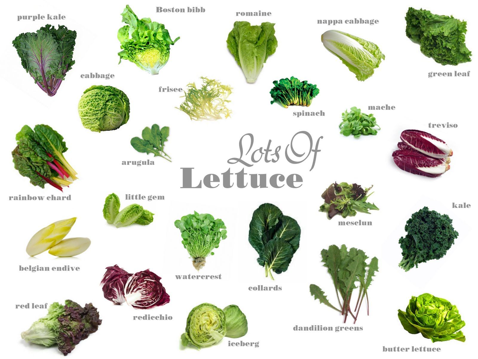 types of lettuce with pictures and names - Google Search ...