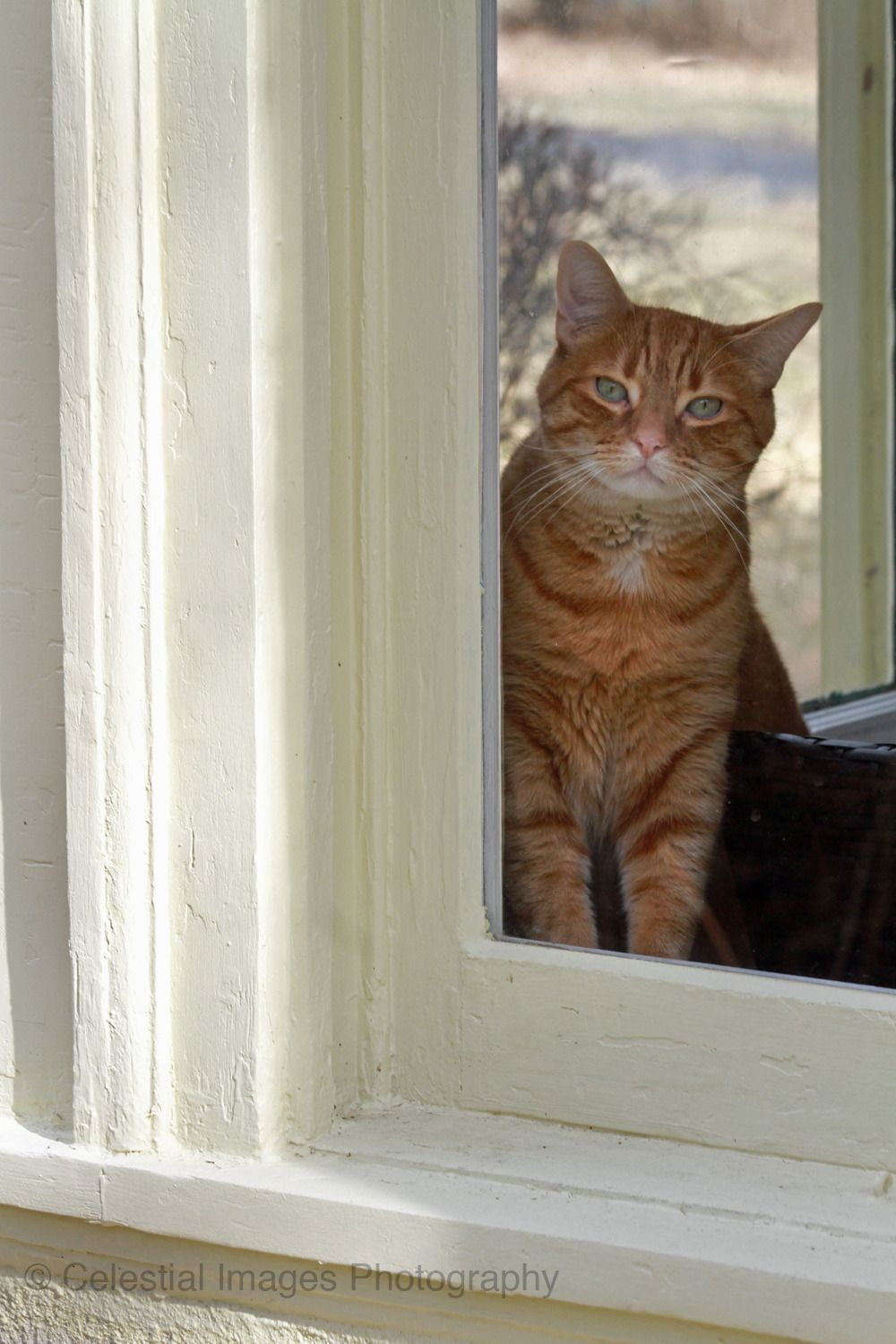 Kitty in the window Tap the link now to see all of our
