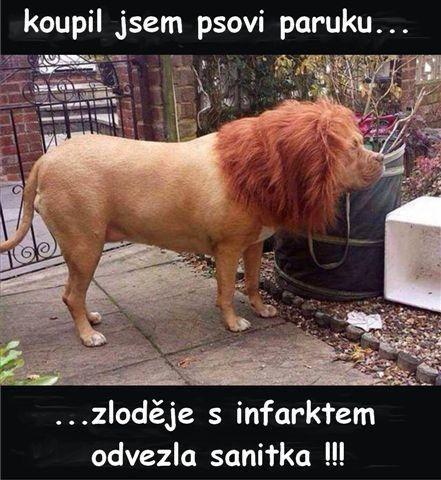 koupil jsem psovi paruku.....zloděje s infarktem odvezla sanitka !!!