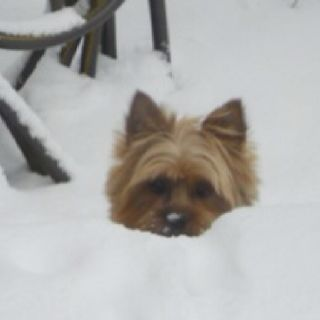 Yorkie In The Snow Why We Moved To Florida Lol Sharing A Family