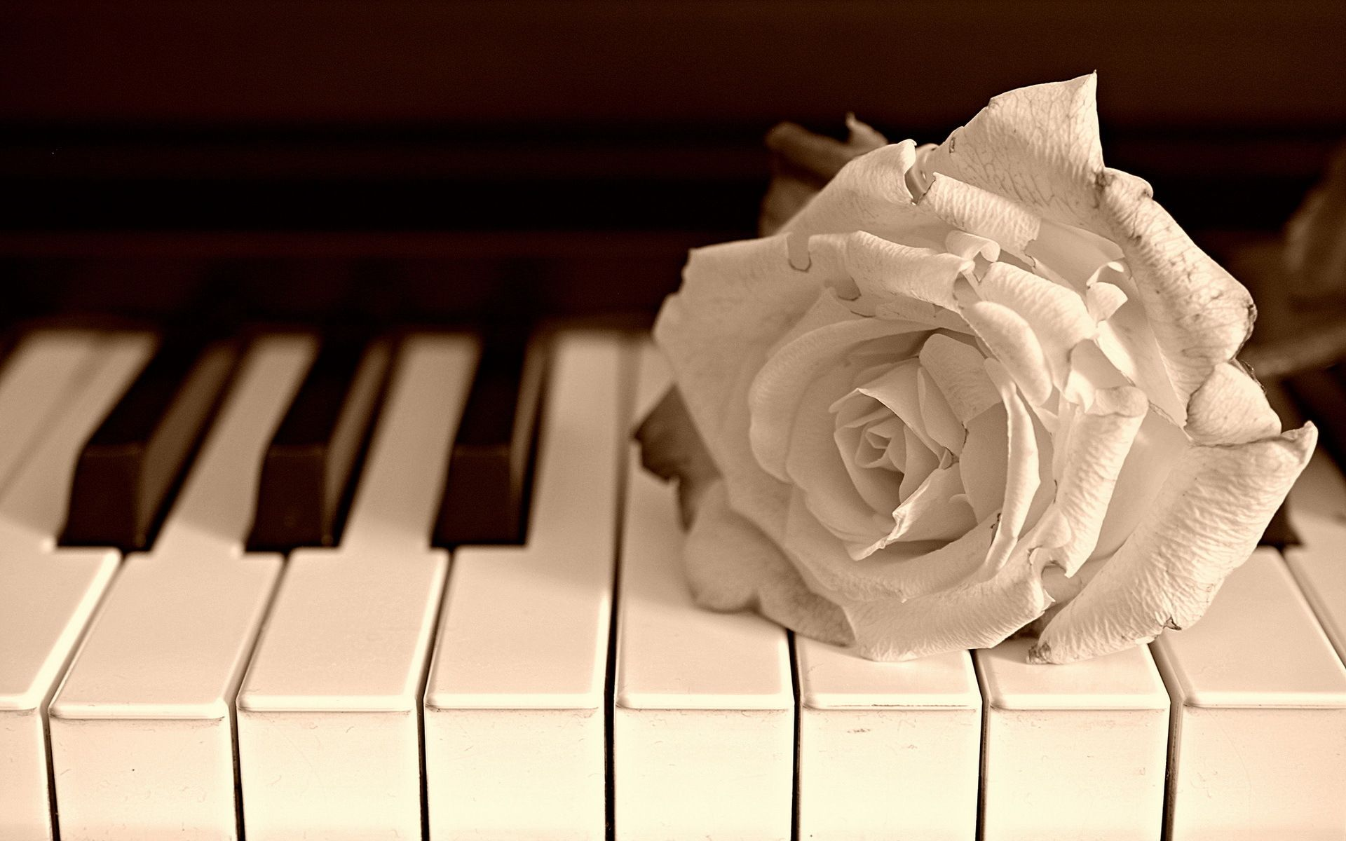 Wallpapers For Blue Rose Piano Wallpaper