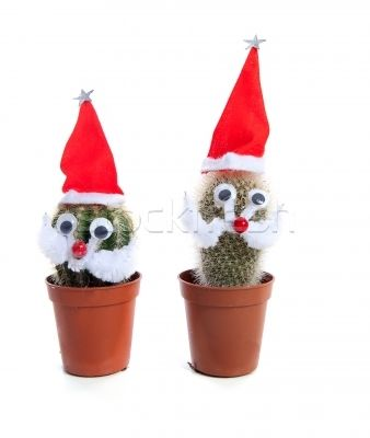 xmas cactus stock photo funny decorated cactus plants for christmas - Decorating Cactus For Christmas