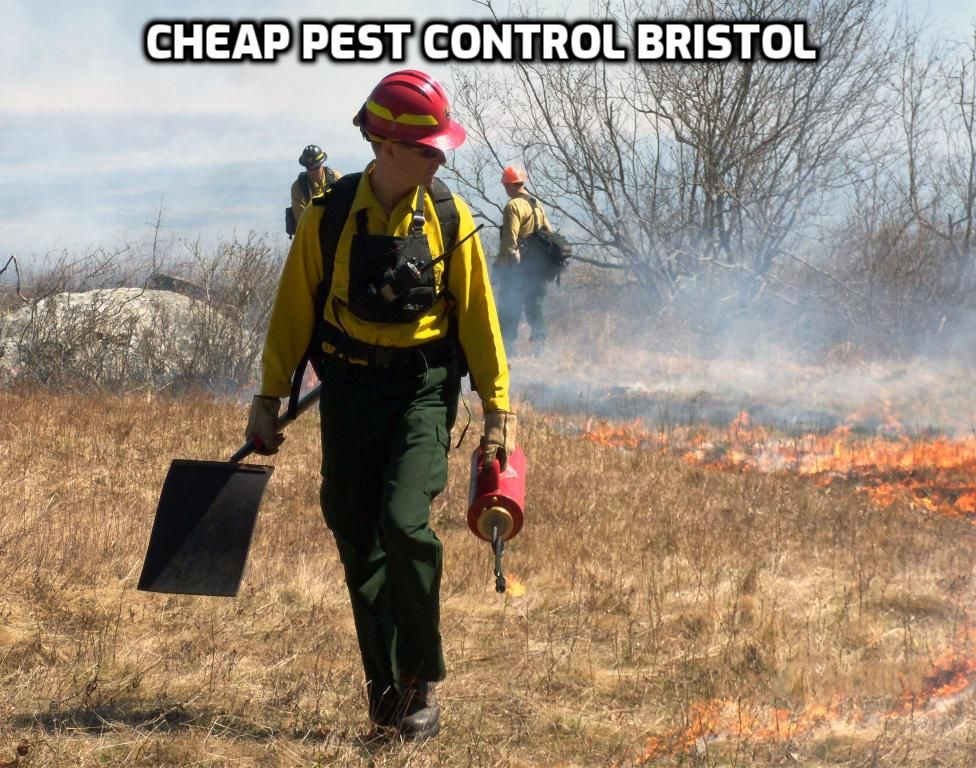 Our Cheap Pest Control services; Call us on +447400000084