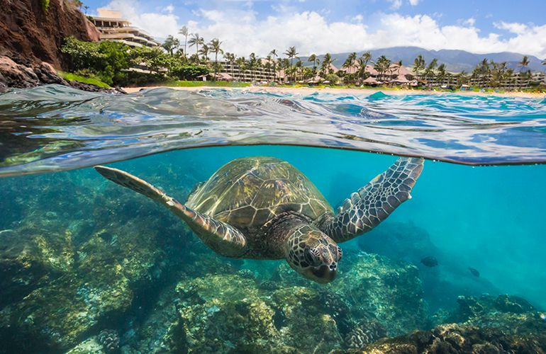 Traveltip A Great Place To Snorkel In Maui Is Ka Anapali Beach
