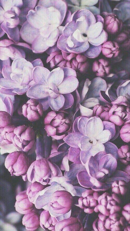 Iphone wallpaper flower flowers pink phone7 purple tumblr iphone wallpaper flower flowers pink phone7 purple tumblr wallpapers apple gold white black green blue background snapchat mightylinksfo