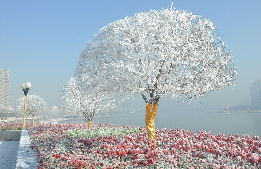 Imagenes de arboles buscar con google hermosos arboles for Arboles en invierno