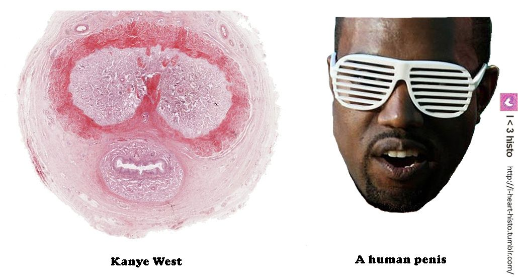 heeft Kanye West hebben een grote penis grote lul tshirt
