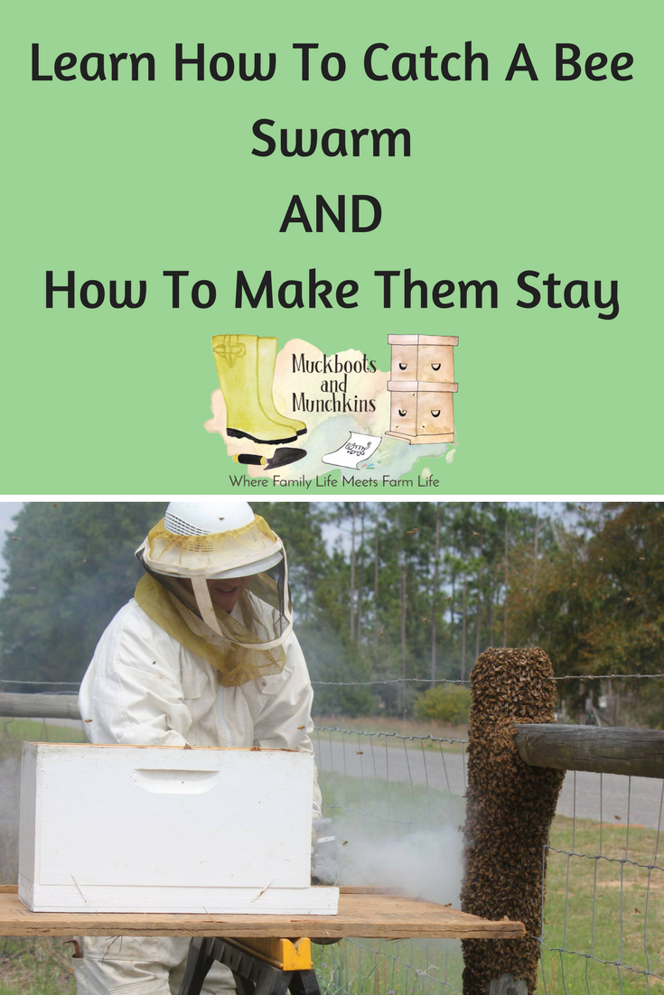 Want To Keep Bees On Your Homestead Here S How To Start Beekeeping For Beginners All You Need To Beekeeping For Beginners How To Start Beekeeping Bee Keeping