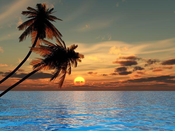 Pin On Trees Tell The Story Of The Season Beautiful wallpaper island sunset