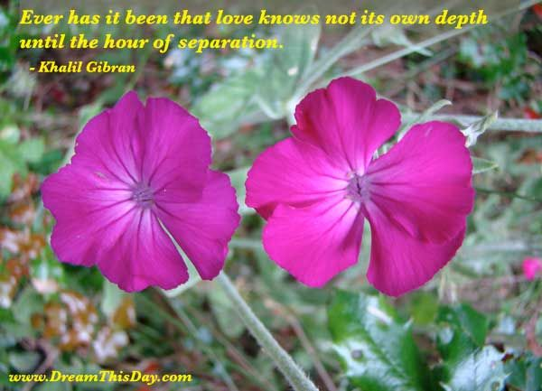 Love/Loss quote. This page has other quotes about the death of ...