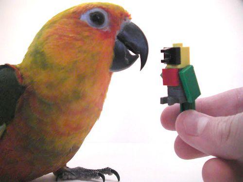 Free Sample LEGO Parrot Mini Model Build | Lego and Lego store