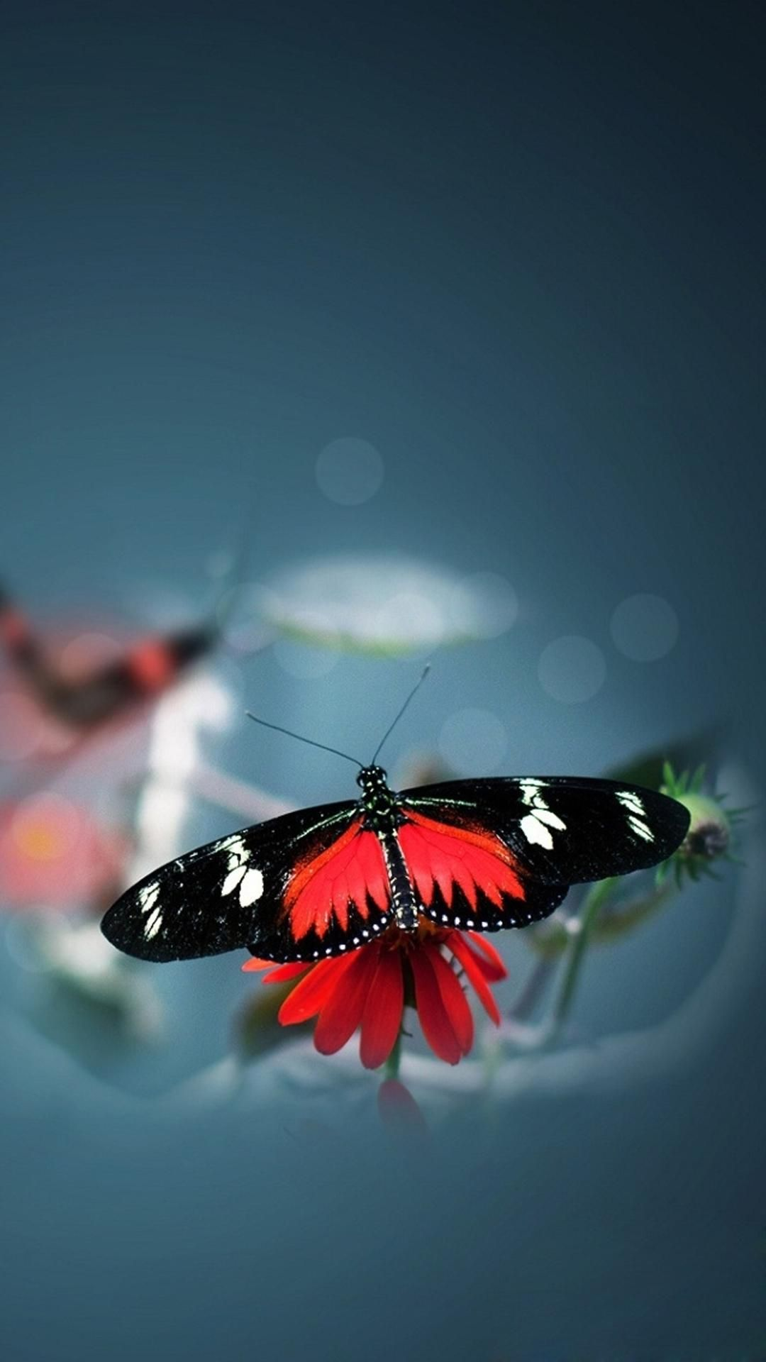 Butterfly Iphone Wallpaper 776261 Beautiful Butterflies