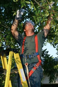 Stump Busters Is Leading Tree Company In The Field Of Services In Deptford Township Nj And The Surroun With Images Tree Service Tree Removal Service Tree Trimming Service