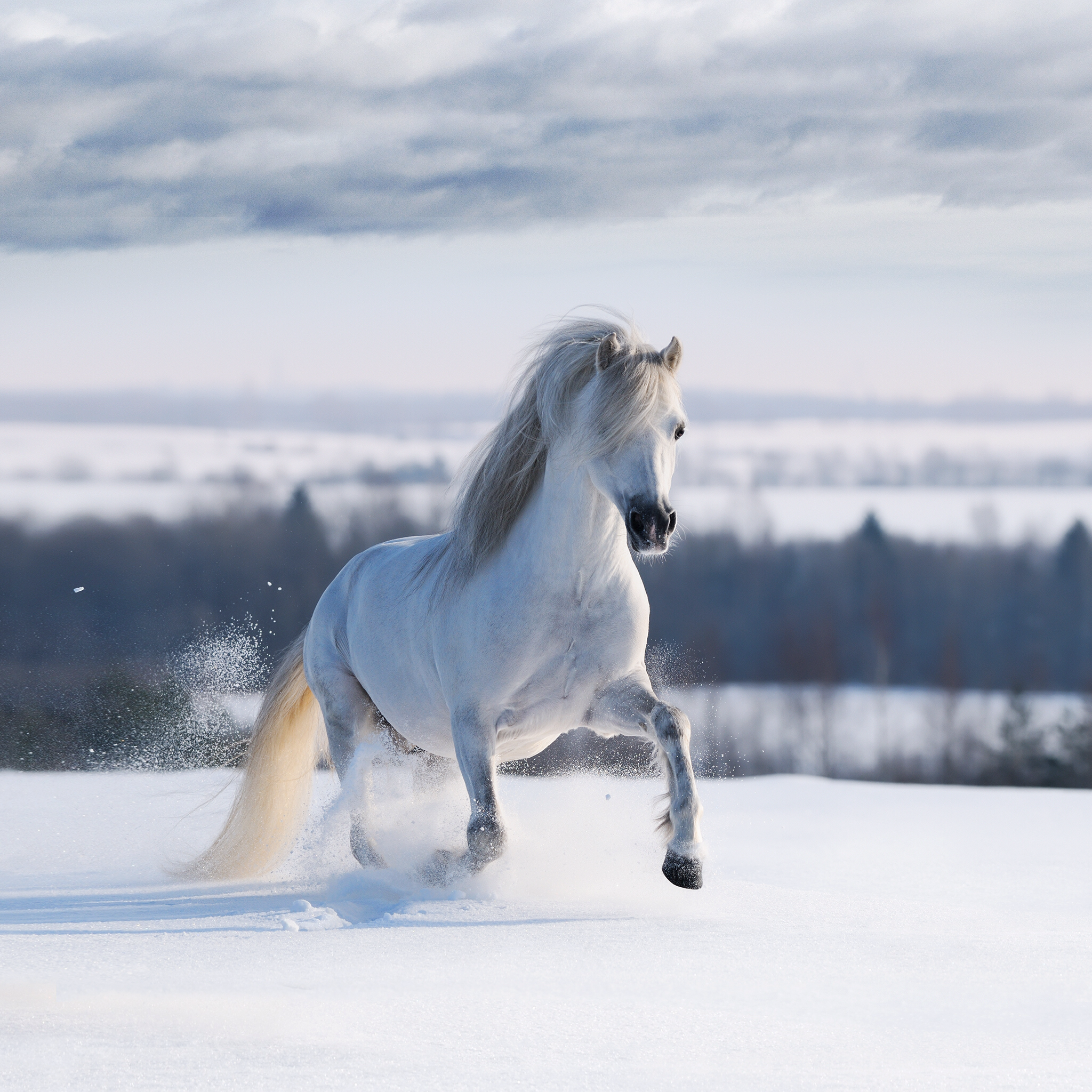 Amazing Wallpaper Horse Snow - fcdfea89eaf4297511b84ad43409fdc5  Collection_59871.png