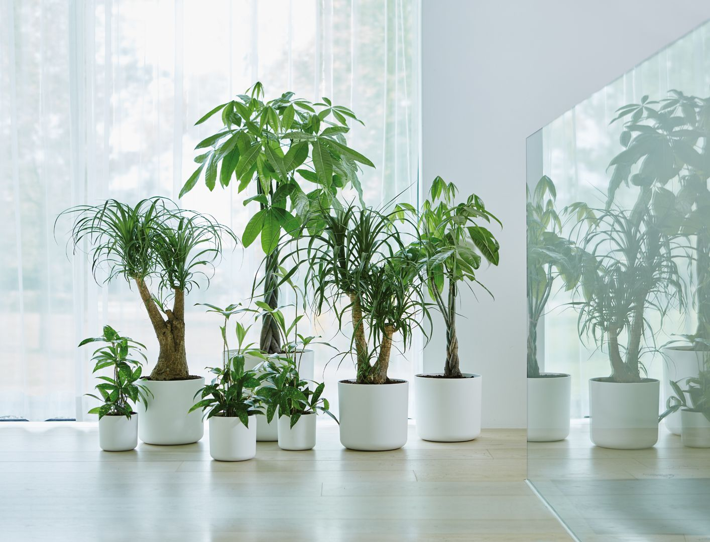 create an indoor jungle #indoor #jungle #greenery #plants #home ...