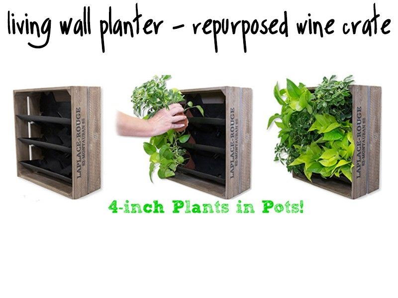 Living Wall Planter From Re Purposed Wine Crates Living Wall Planter Wine Crate Wall Planter