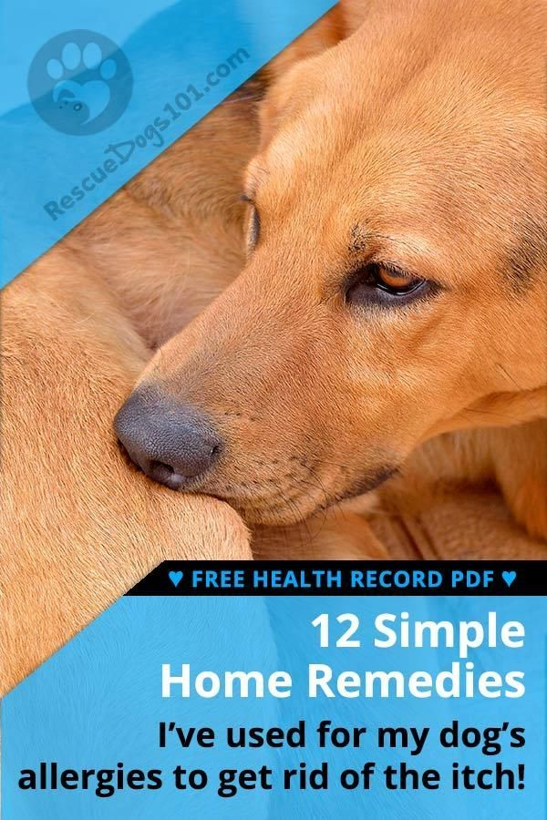 The Ultimate Guide To Home Remedies For Dog Allergies Puppy