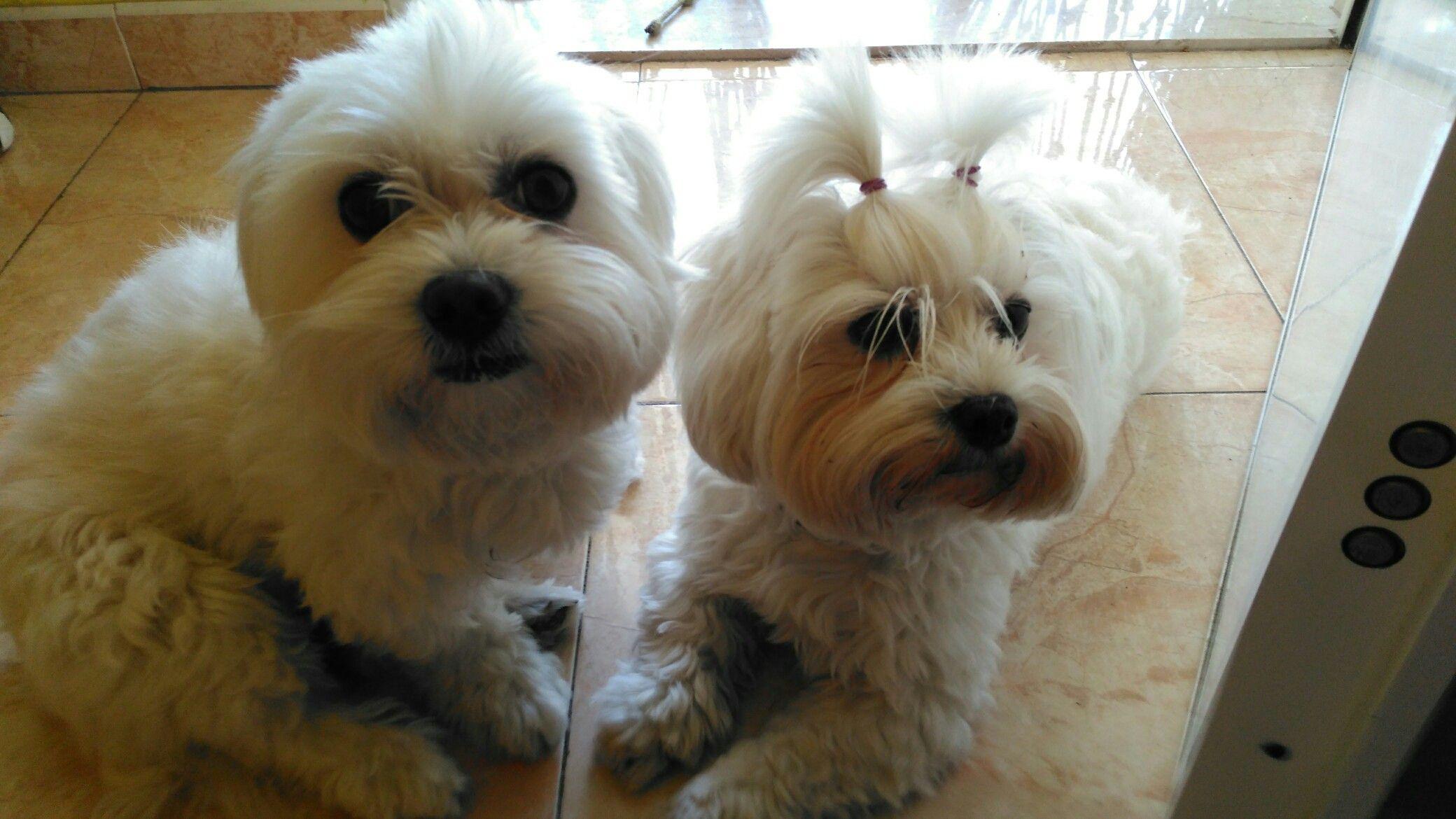 Mis mascotas Polka kiars