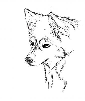 Husky Drawing With Images Puppy Coloring Pages Husky Drawing