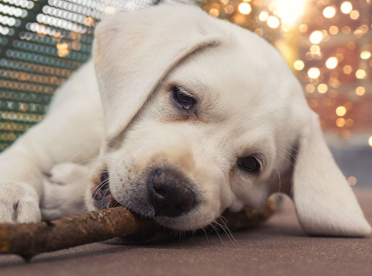 Pin by Rajen Kherde on Homeopathy Dogs, Pet care, Homeopathy