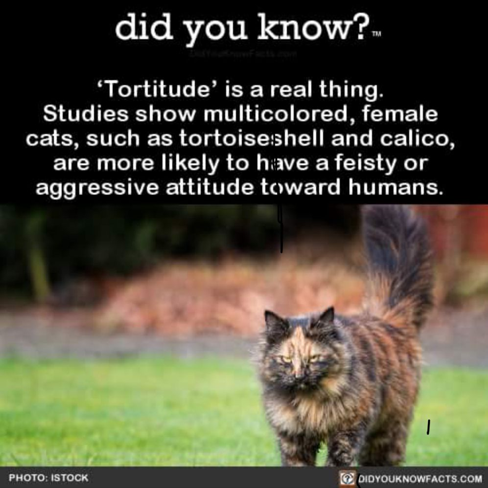 Pin by Cindy Z. on Cats Dog facts, Tortoise as pets, Cat
