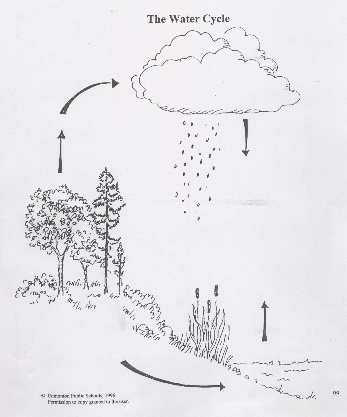 teaching tree diagram 2003 nissan altima engine water cycle scout stuff pinterest science forest