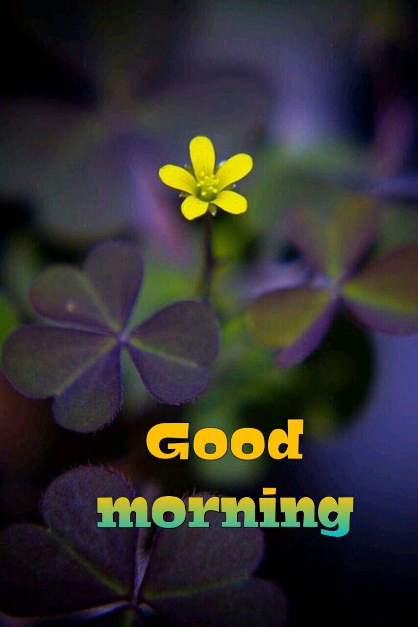 Good Mornings Good Morning Happy Saturday Good Morning Meme Good Morning Good Night