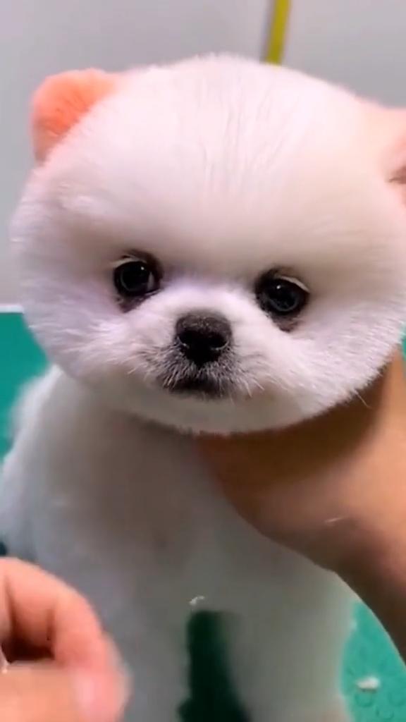 cutw puppy