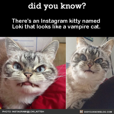 did-you-kno:  Kitty is trying to disguise herself as cute. But kitty is obviously evil. Just look at that aversion to sunlight. Source