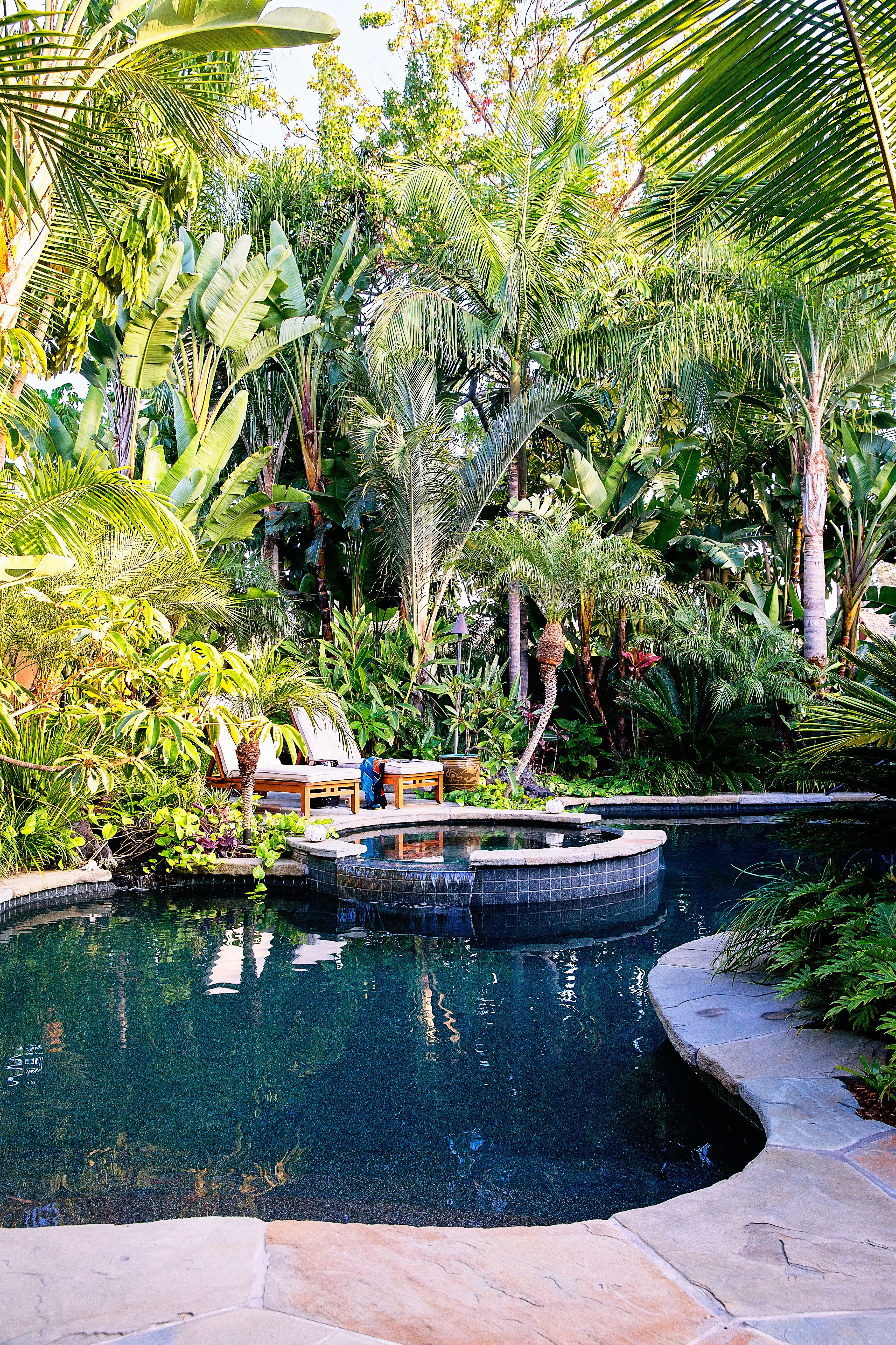 Tropical Plants Retreat Sunset Com Tropical Pool Landscaping Backyard Pool Landscaping Tropical Backyard