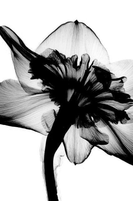 Poster - Narciso