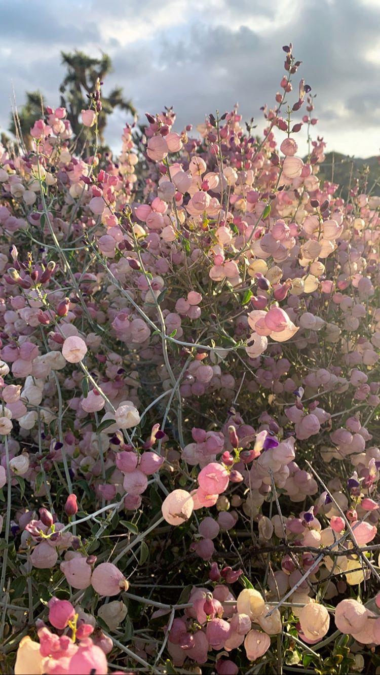 falkenburg tree service on stories instagram botanical floral botanical plants stories instagram botanical floral