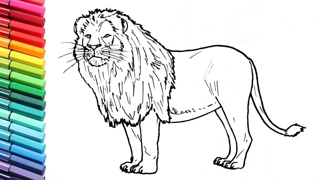 How To Draw A Lion Learning Wild Animals Color Pages For Kids Learni Animals Drawing Images Animal Drawings Pet Animals Drawing
