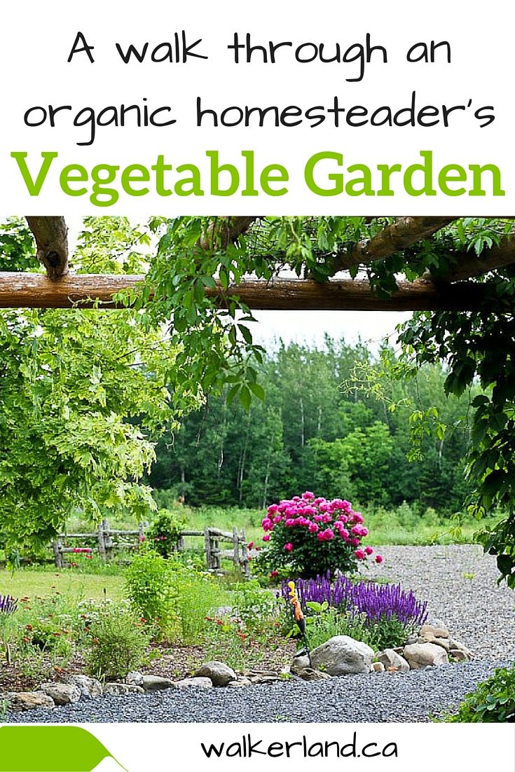We rely heavily on our garden. It must produce.  Here in Northern New Brunswick Canada (zone 4a) the growing season is quite short and there aren't too many opportunities to make up for lost crops. Let us take you through the gardens and show you the techniques we have used to solve some of our problems.