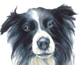 How To Paint A Border Collie Google Search Dog Paintings Dog