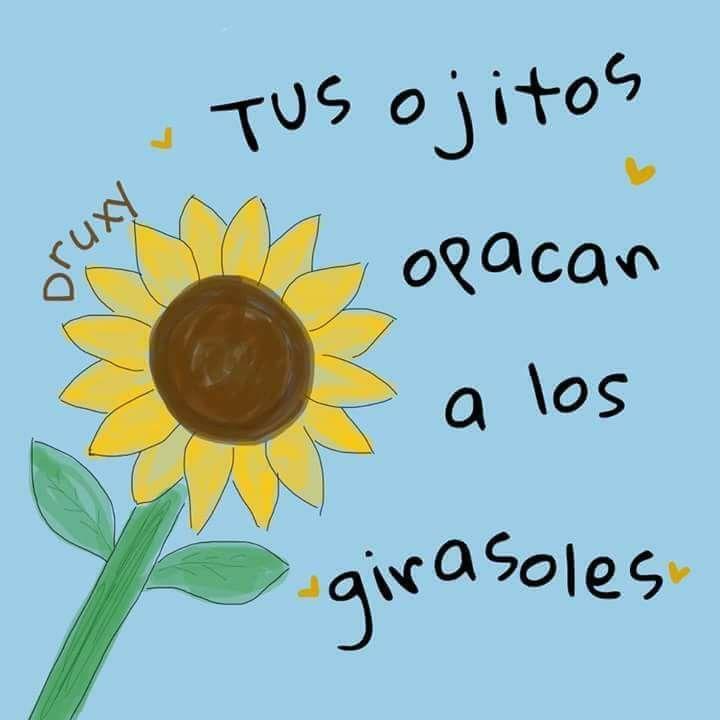 Sus Ojos Cafes Frases De Ojos Frases Girasoles Frases De Amor