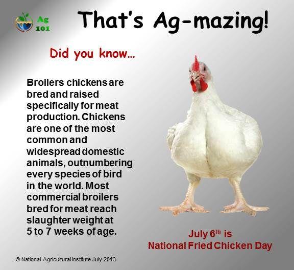 Broiler Chicken | Ag-mazing Facts! | Pinterest | Chicken