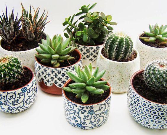 Resultat De Recherche D Images Pour Cactus Bureau P L A N T S