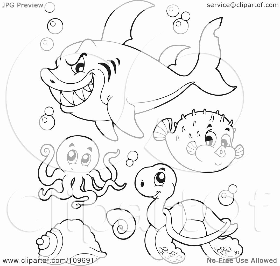Puffer Fish Coloring Page Luxury Clipart Outlined Mean Shark Octopus Puffer Fish And Sea Turtle Coloring Pages Fish Coloring Page Octopus Colors