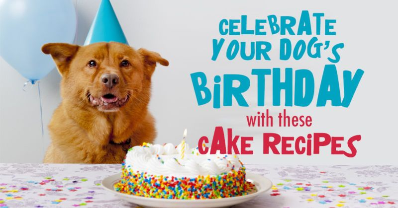 Celebrate Your Dog's Birthday with These EasyPeasy Cake