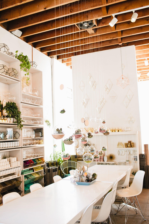 Shop Spotlight Pigment Room With Plants Home Decor Store Design