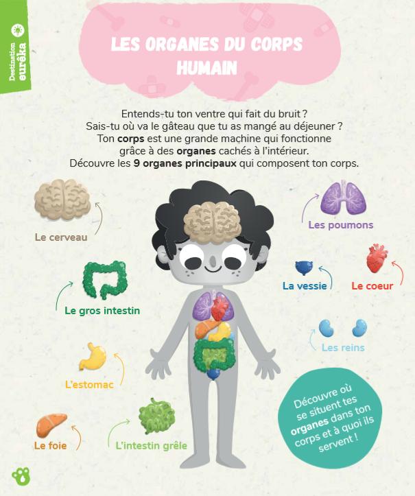 Comprends Les Organes Du Corps Humain Le Blog Pandacraft Organes Du Corps Humain Systemes Du Corps Humain Activites Du Corps Humain