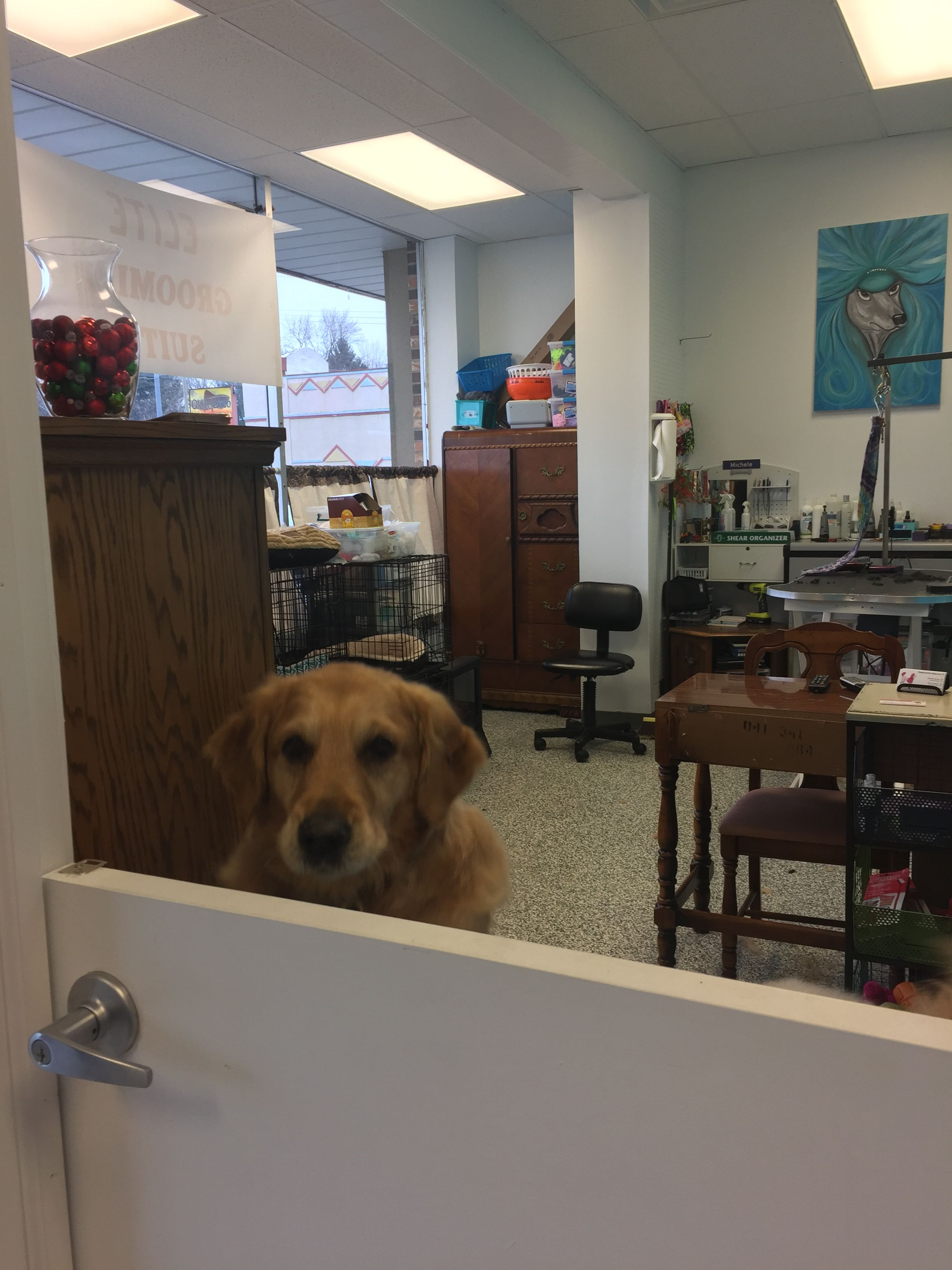 Repinned Pampered Pets Salon Ellie Business Decor Pet Salon