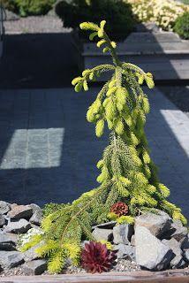 Flora Wonder Blog: June 2012